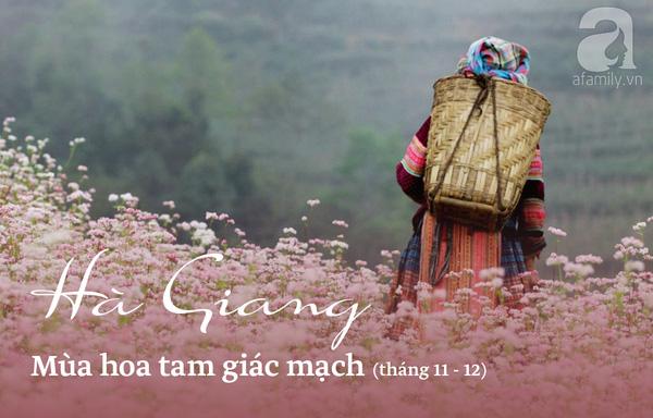 Đi du lịch đúng theo lịch này, bạn sẽ phải ngỡ ngàng trước cảnh sắc Việt Nam