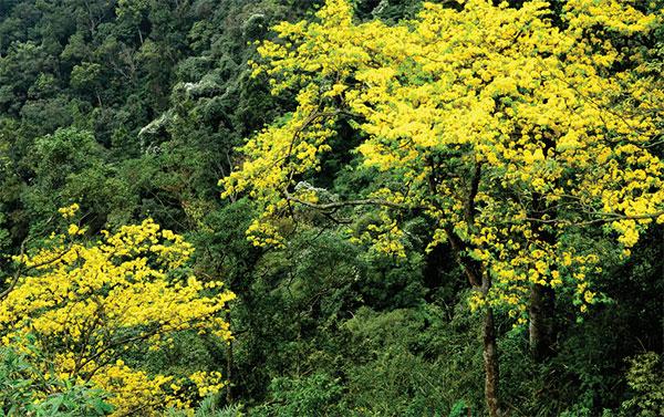 Hạ Long rực rỡ trong màu hoa